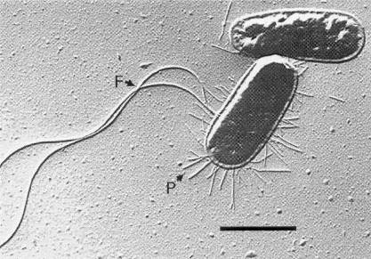 esherichia coli essay Click here to learn about ozone and ecoli papers website: www effectiveness of ozone for inactivation of escherichia coli and bacillus cereus in.