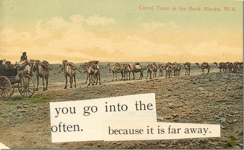 Camels