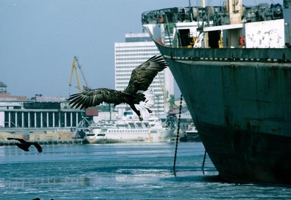 02 Eagle