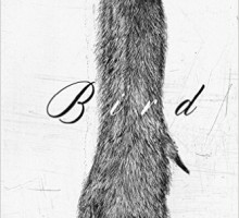 Bird: Novel Excerpt --- Noy Holland